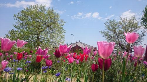 春の日.JPG